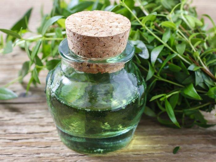myrtleessential-oil